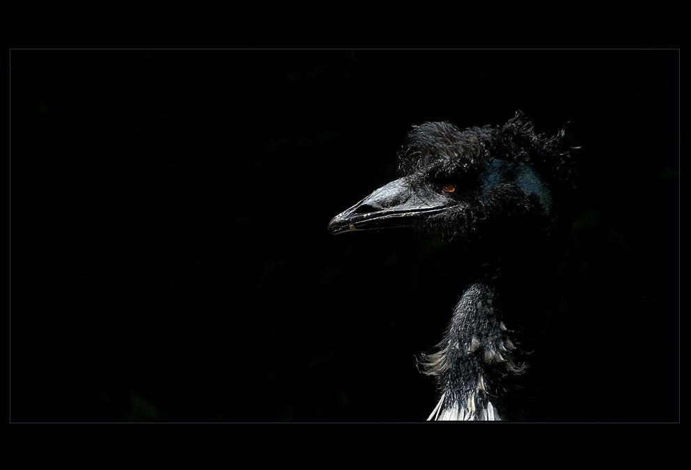 Der gruseligste unter den Emus?