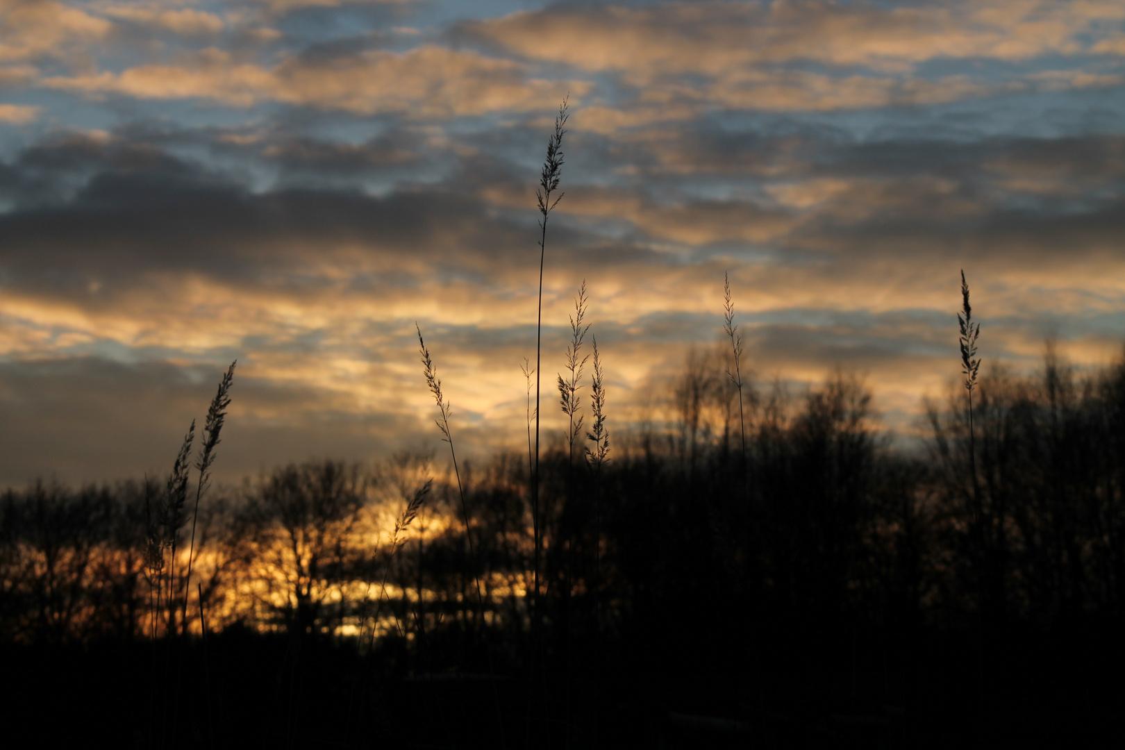 Der Halm im Sonnenuntergang