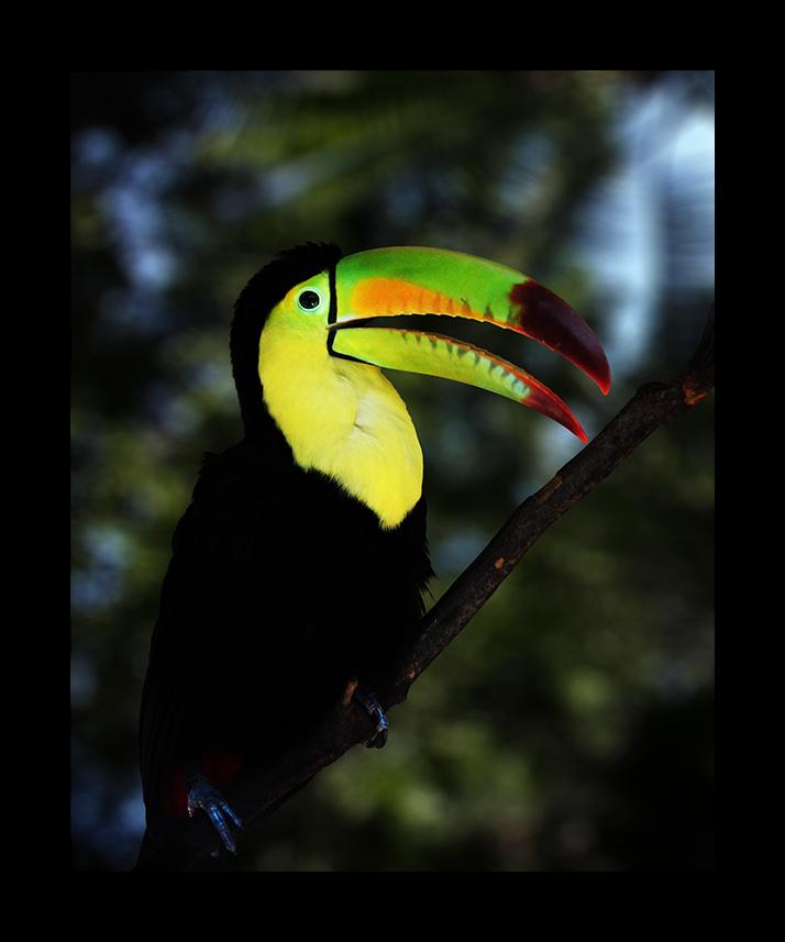 "Der ""Haribo Tropifrutti"" Vogel"