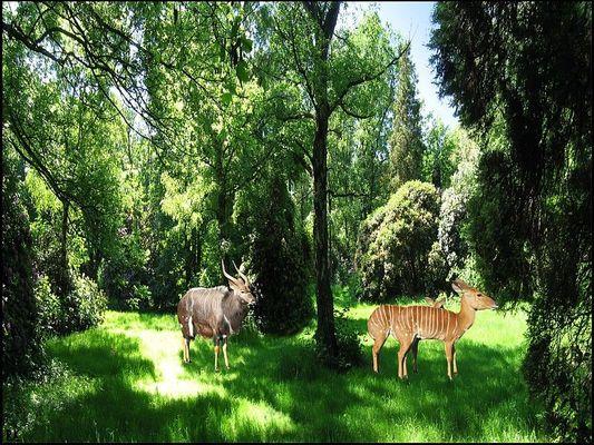 der heimische Forst