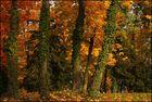 Der Herbst ...
