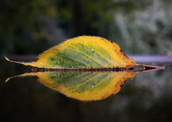 Der Herbst als Künstler