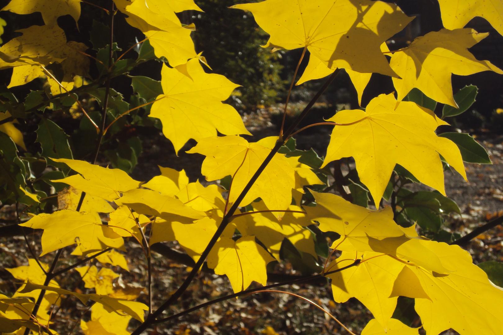 Der Herbst als Maler II