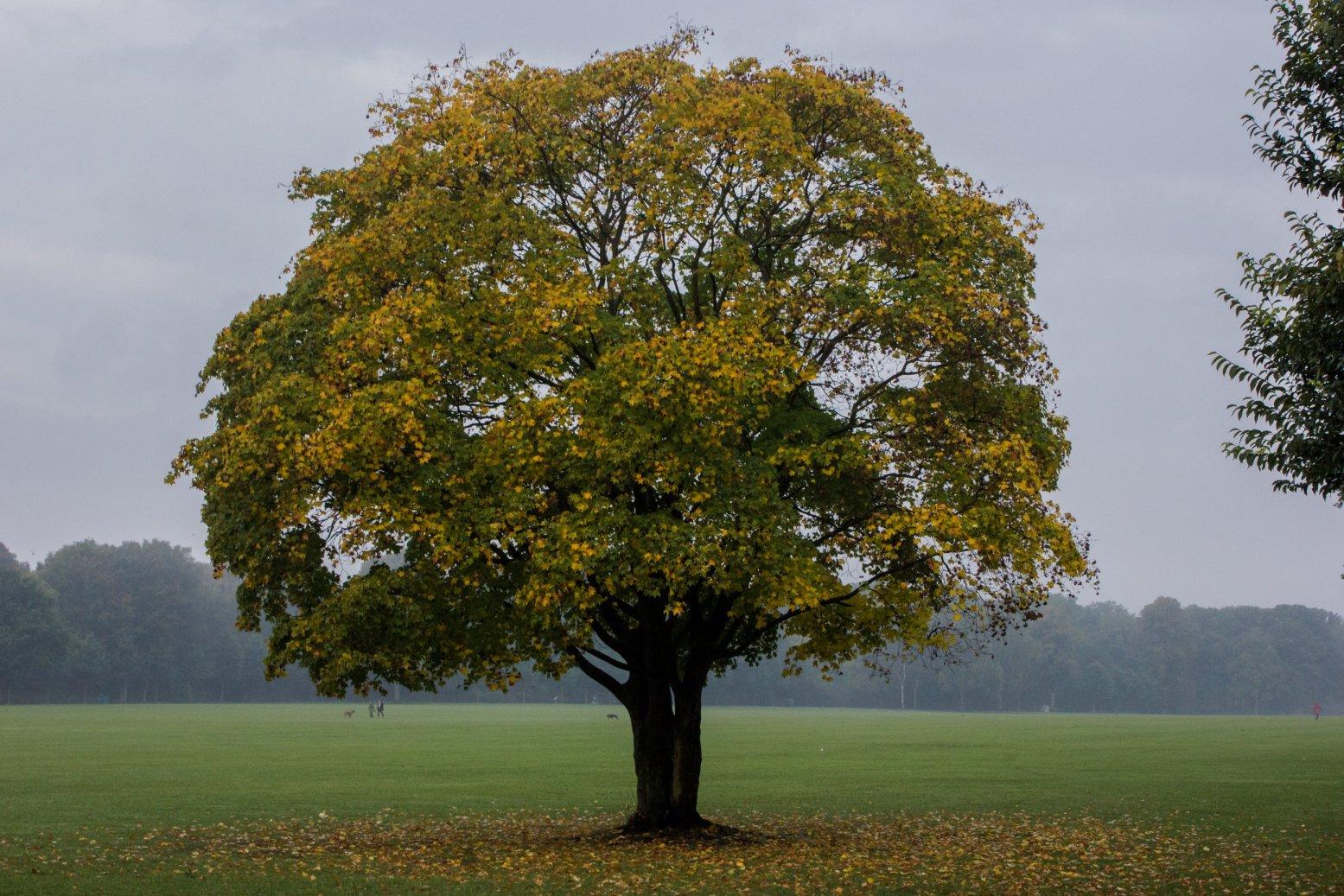 Der Herbst - Baum