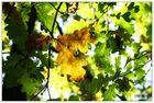 Der Herbst beginnt...