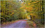 Der Herbst beginnt (el otoño empieza)
