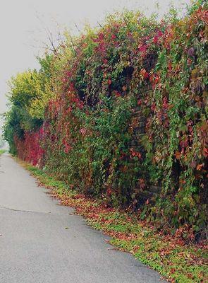 Der Herbst besiegt den Sommer :-(