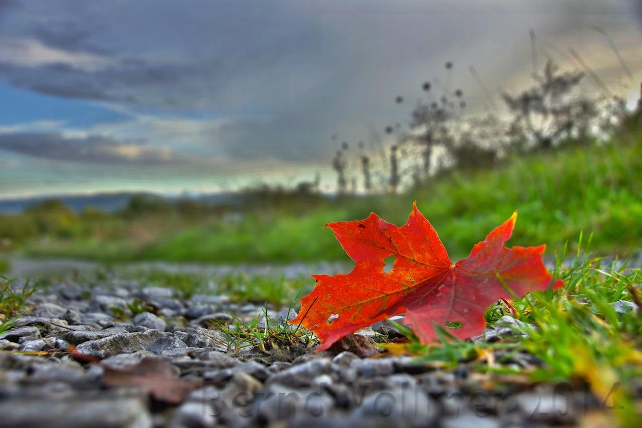 Der Herbst bleibt noch ein paar Tage!
