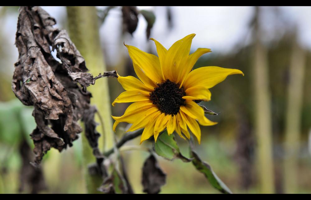... der Herbst braucht mich ...