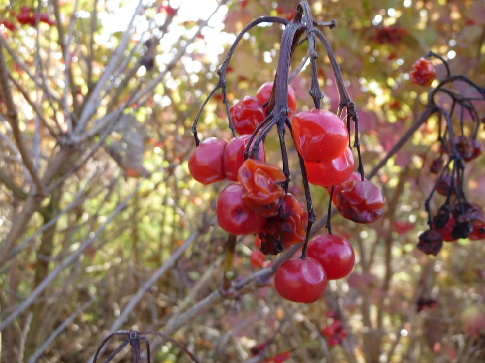 Der Herbst bricht an