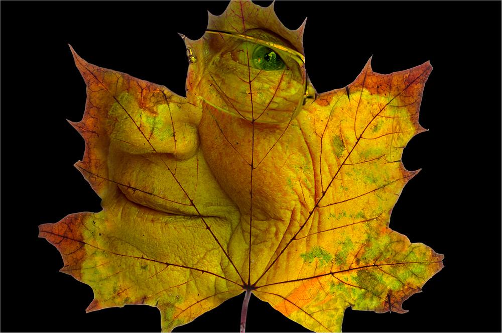 Der Herbst des Lebens