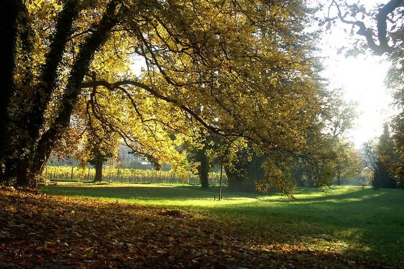 Der Herbst die Bunte-Jahreszeit