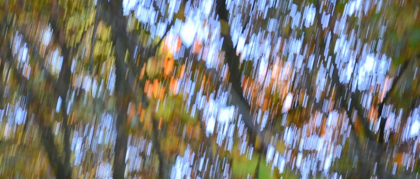 Der Herbst eilt dahin