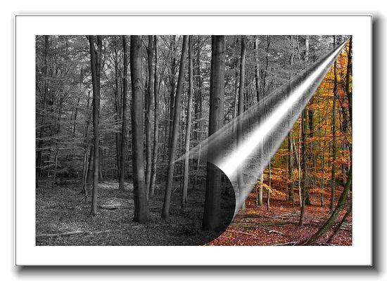 Der Herbst endet, die graue Jahreszeit beginnt......