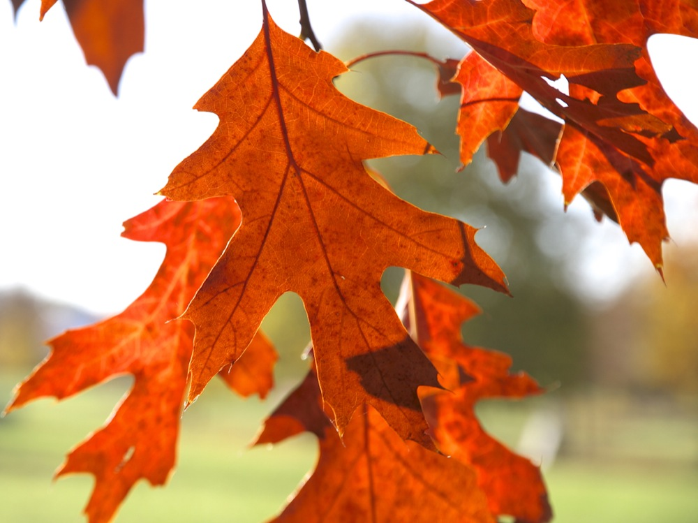 Der Herbst-er malt so schön . . .