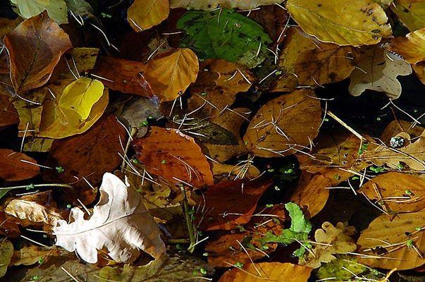 Der Herbst fällt ins Wasser