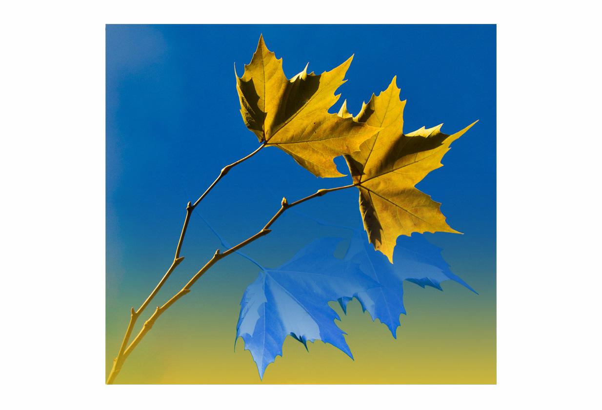 °°° Der Herbst geht....°°°