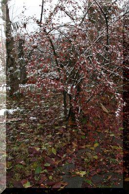 Der Herbst geht ... der Winter kommt...
