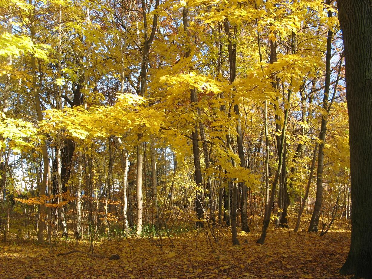 Der Herbst geht zu Ende...