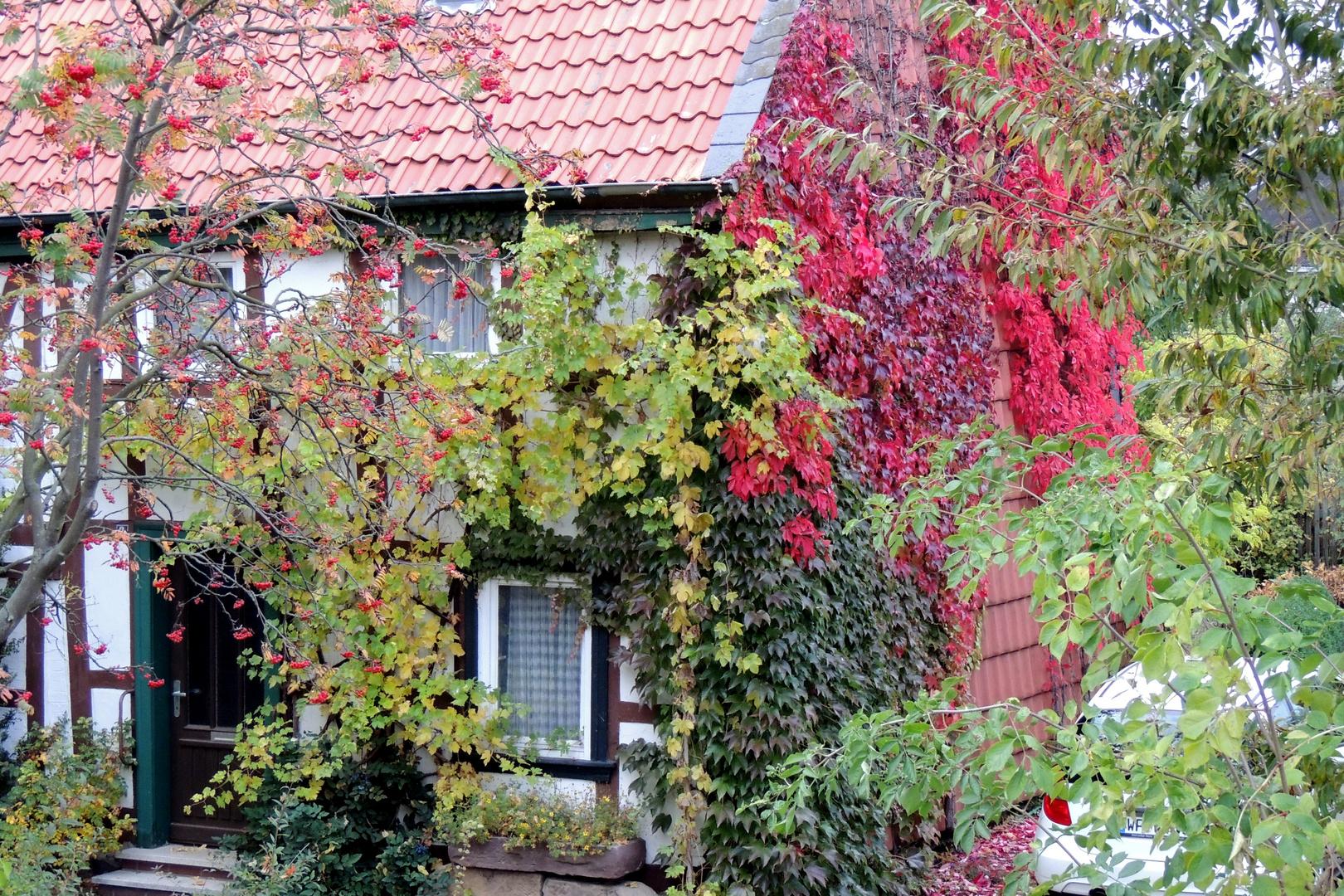 Der Herbst greift in den Tuschkasten