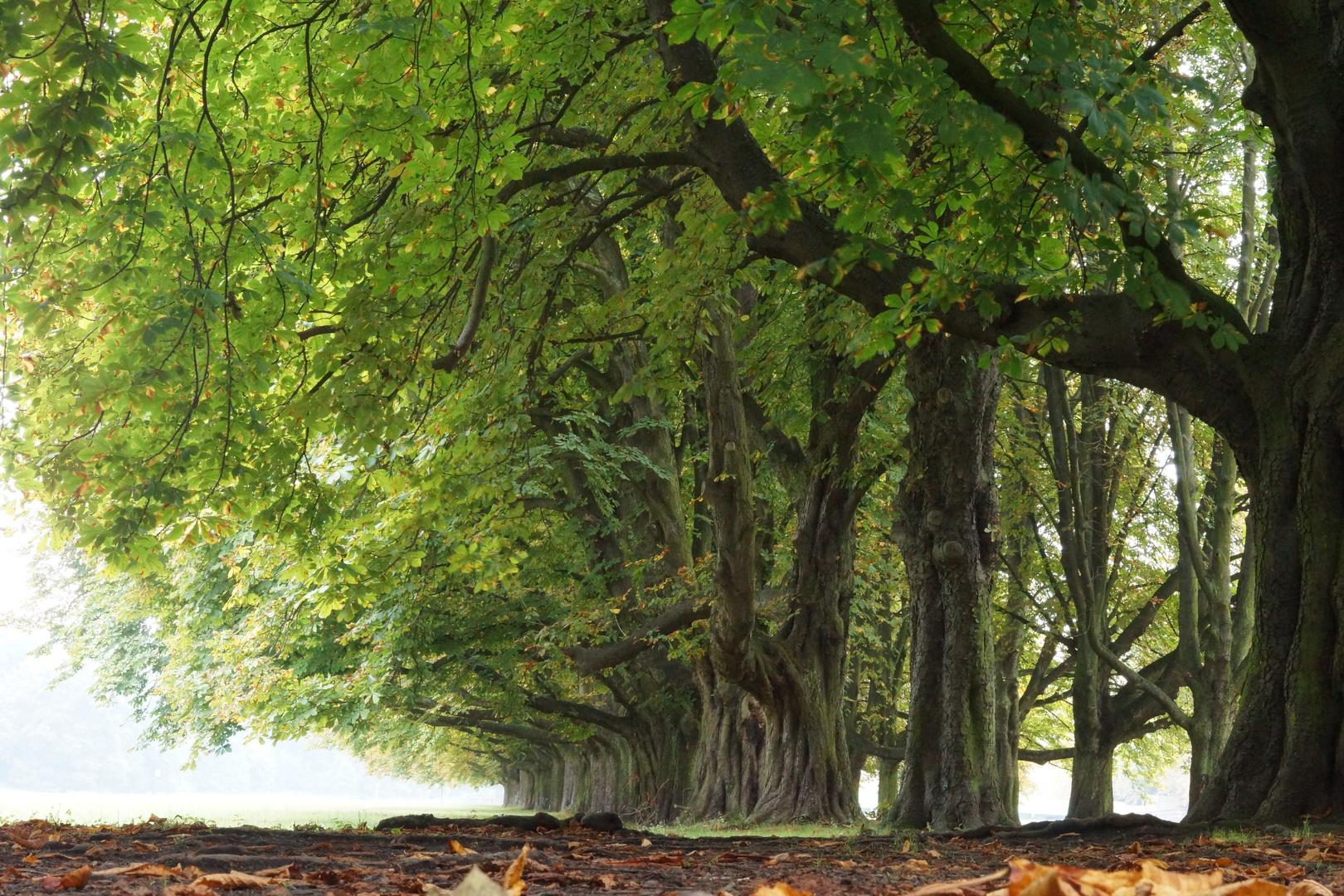 der Herbst... hält Einzug
