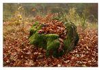 Der Herbst hat angerichtet