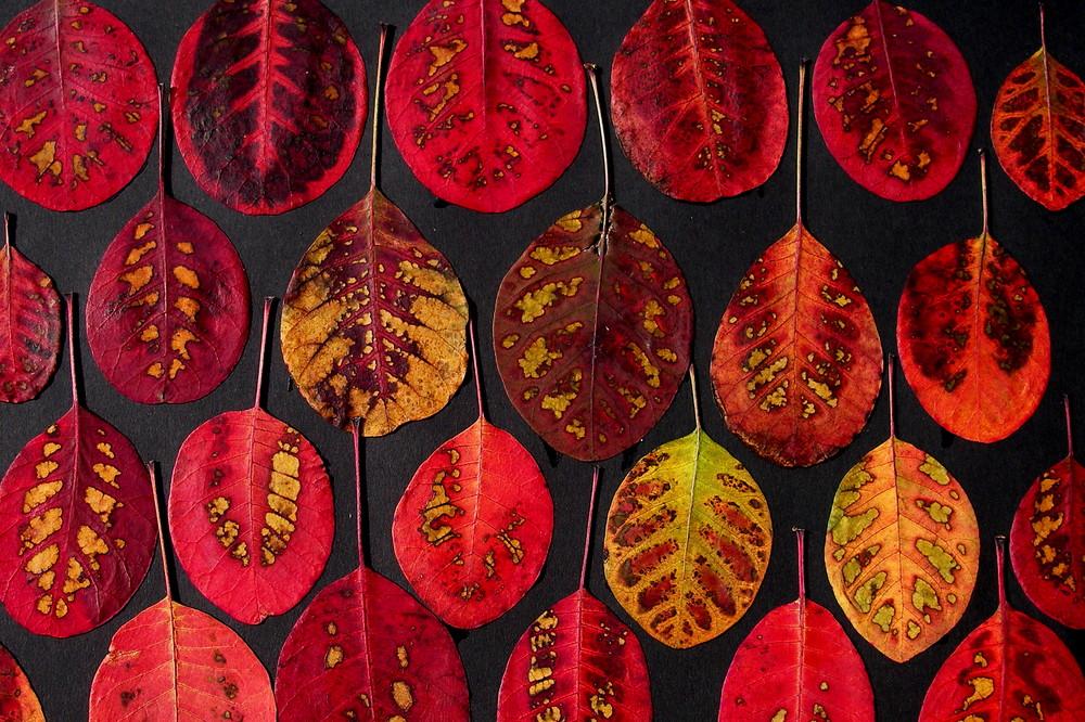 Der Herbst hat uns so gestaltet