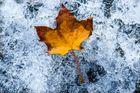 Der Herbst im Eis
