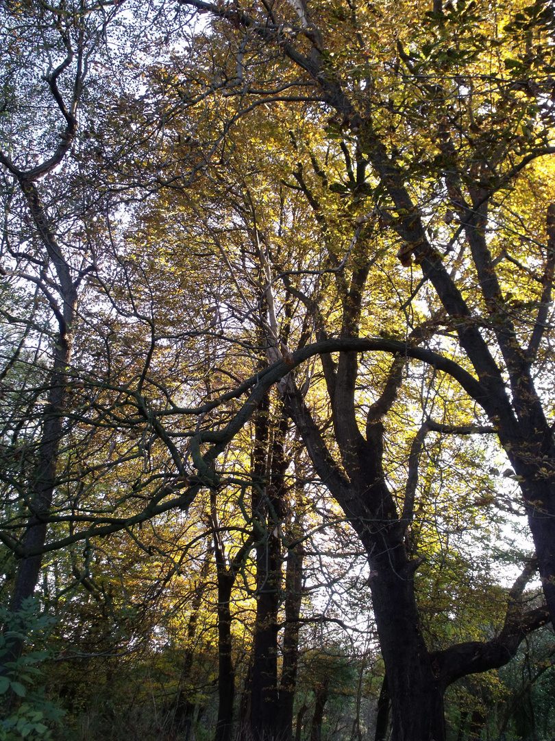 Der Herbst im Wald