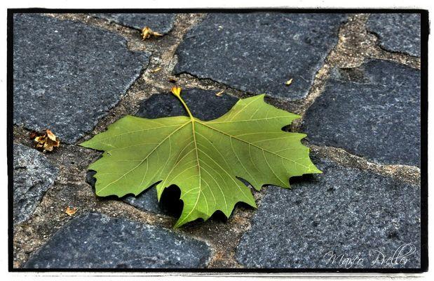 Der Herbst in HDR