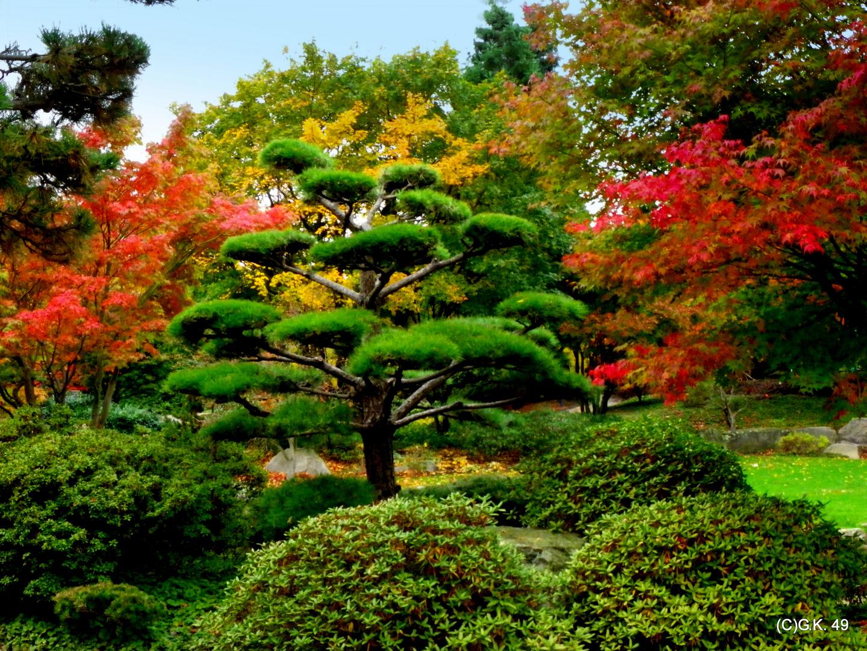 Der Herbst in seiner Farbenvielfalt !