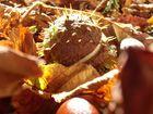 Der Herbst in voller Pracht