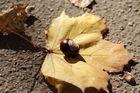 Der Herbst ist angerichtet...