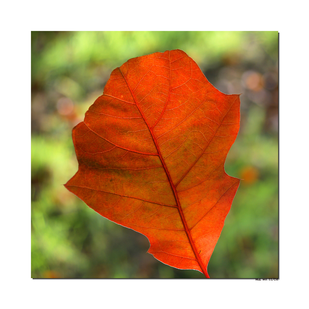 Der Herbst ist bunt............