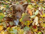 * Der Herbst ist da *