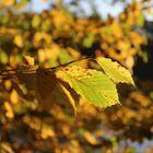 Der Herbst ist da 2