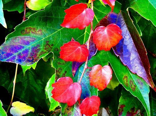 Der Herbst ist da / 2011