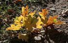 Der Herbst ist da - [2013]