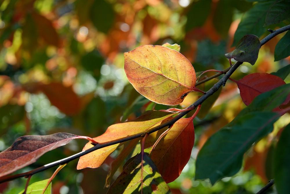 Der Herbst ist da ....