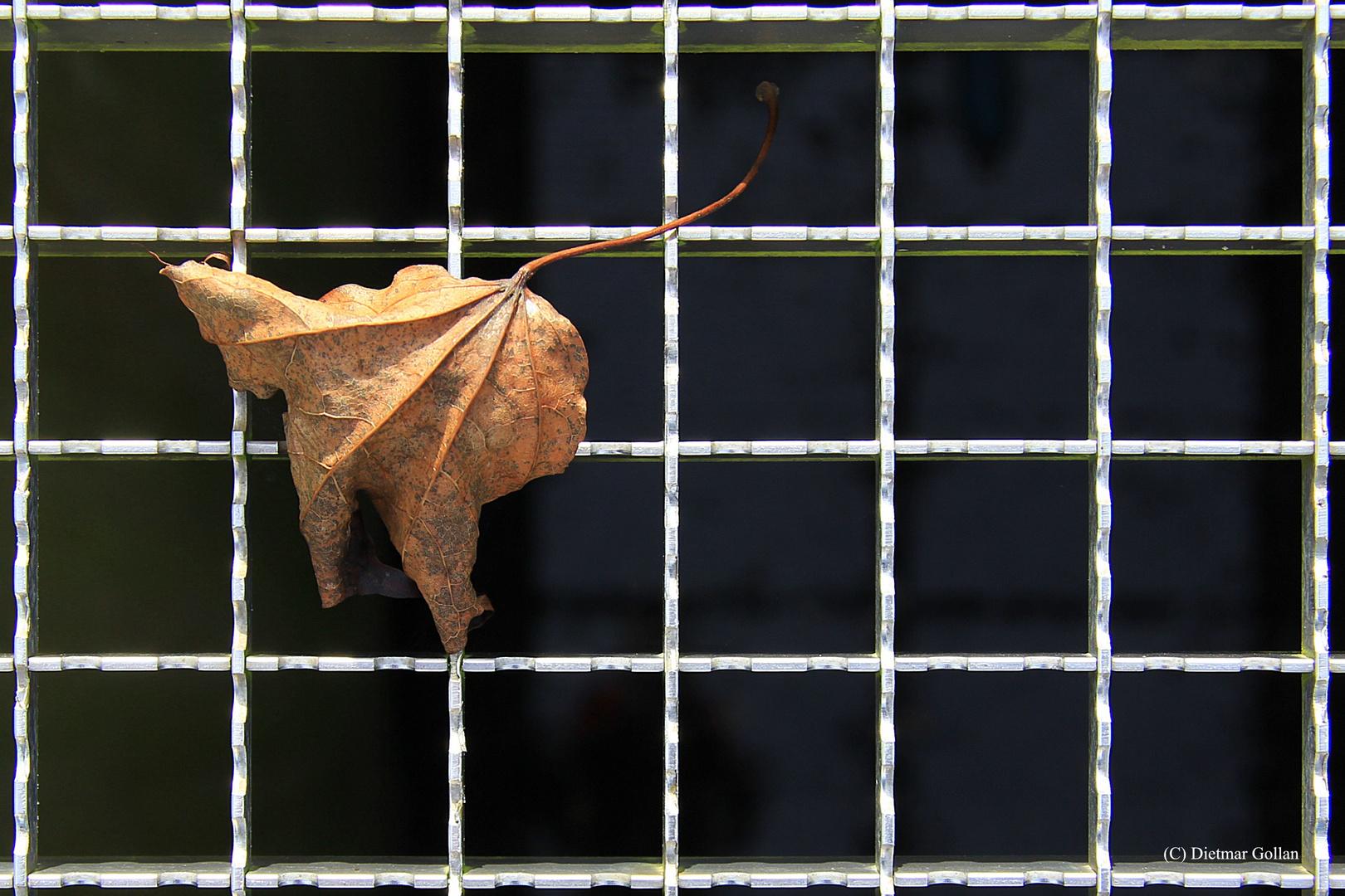 ... der Herbst ist da