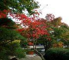 Der Herbst ist da