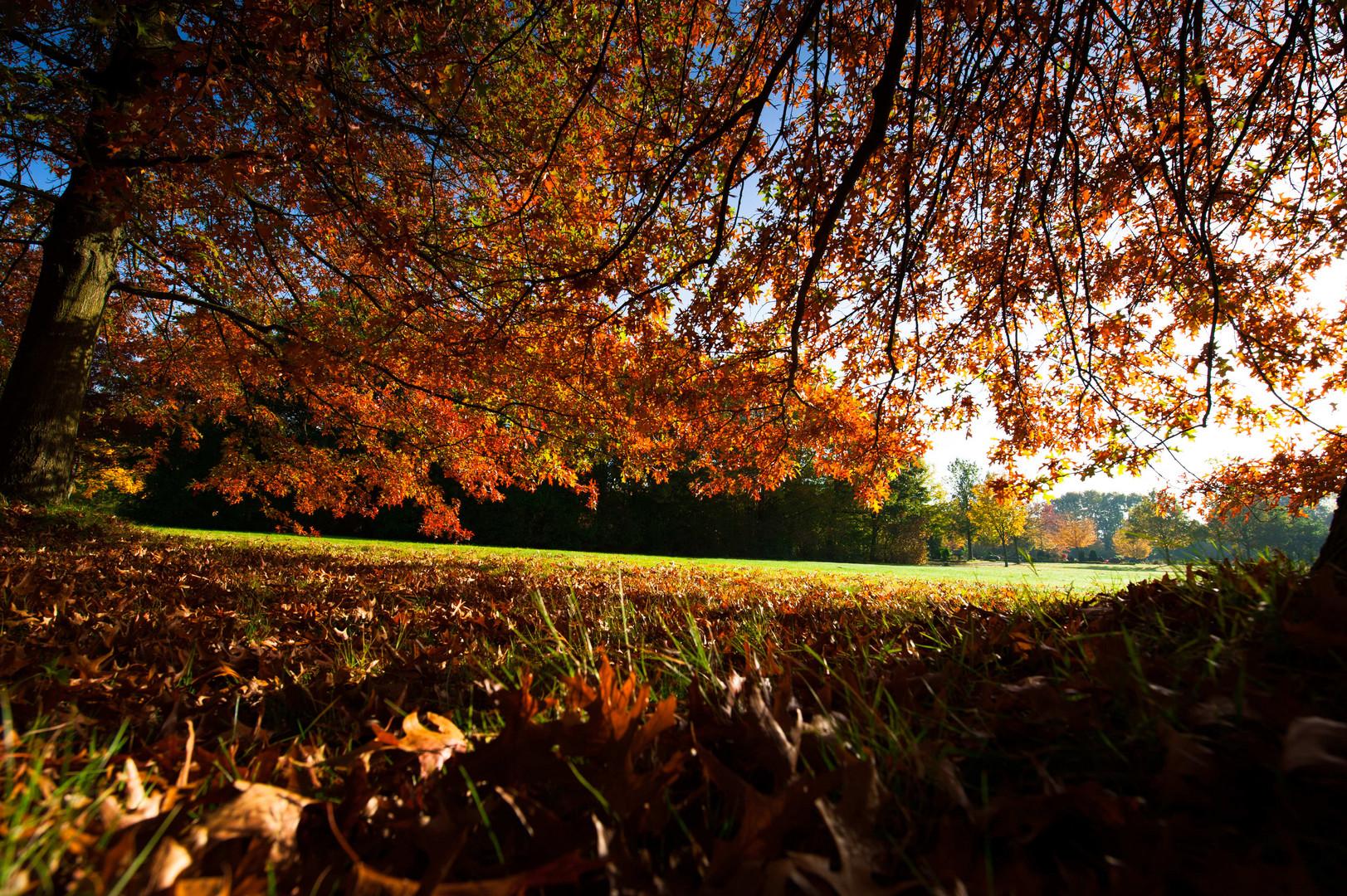 Der Herbst ist da :-(