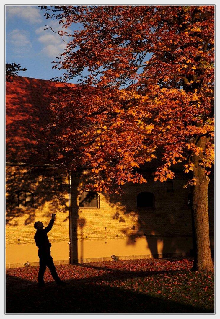 ... der Herbst ist da ...