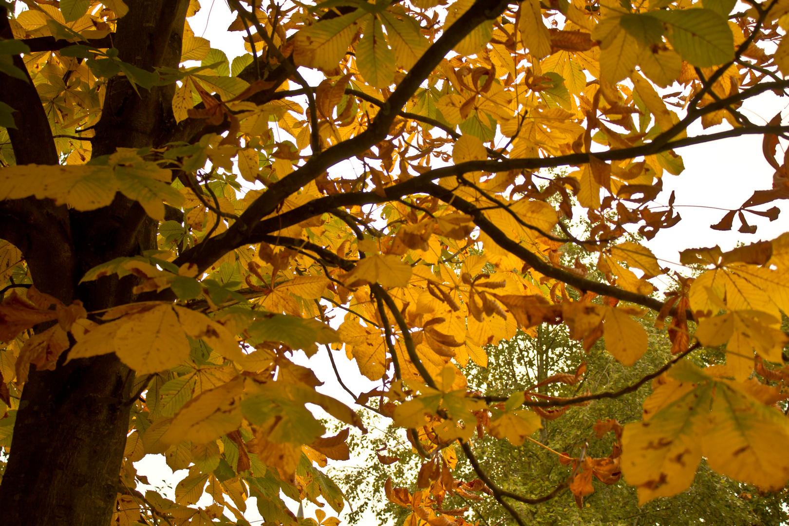 Der Herbst ist da No. 1