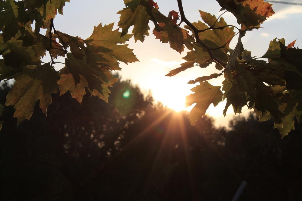 Der Herbst ist schon zu Ende.