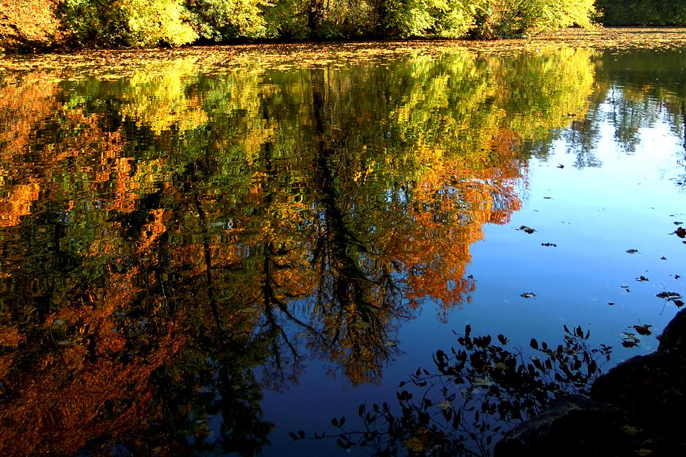 Der Herbst ist unterwegs...