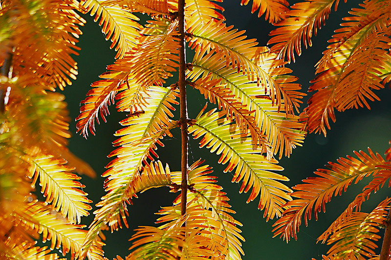 Der Herbst kennt in der Farbgebung keine Grenzen....