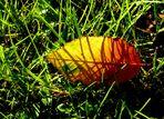 Der Herbst klopft leise an...