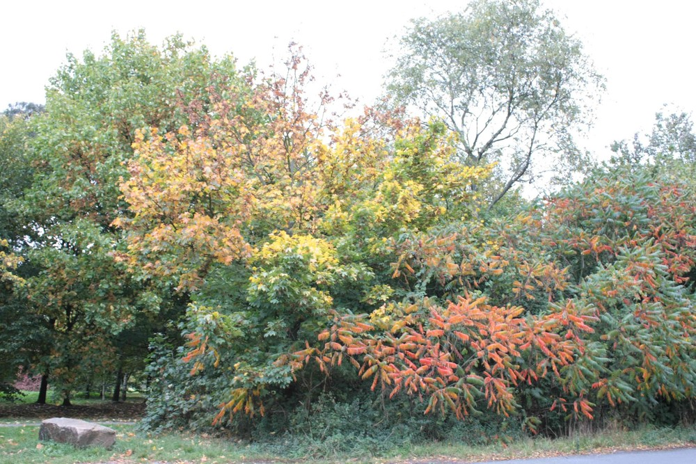 Der Herbst kommt !!