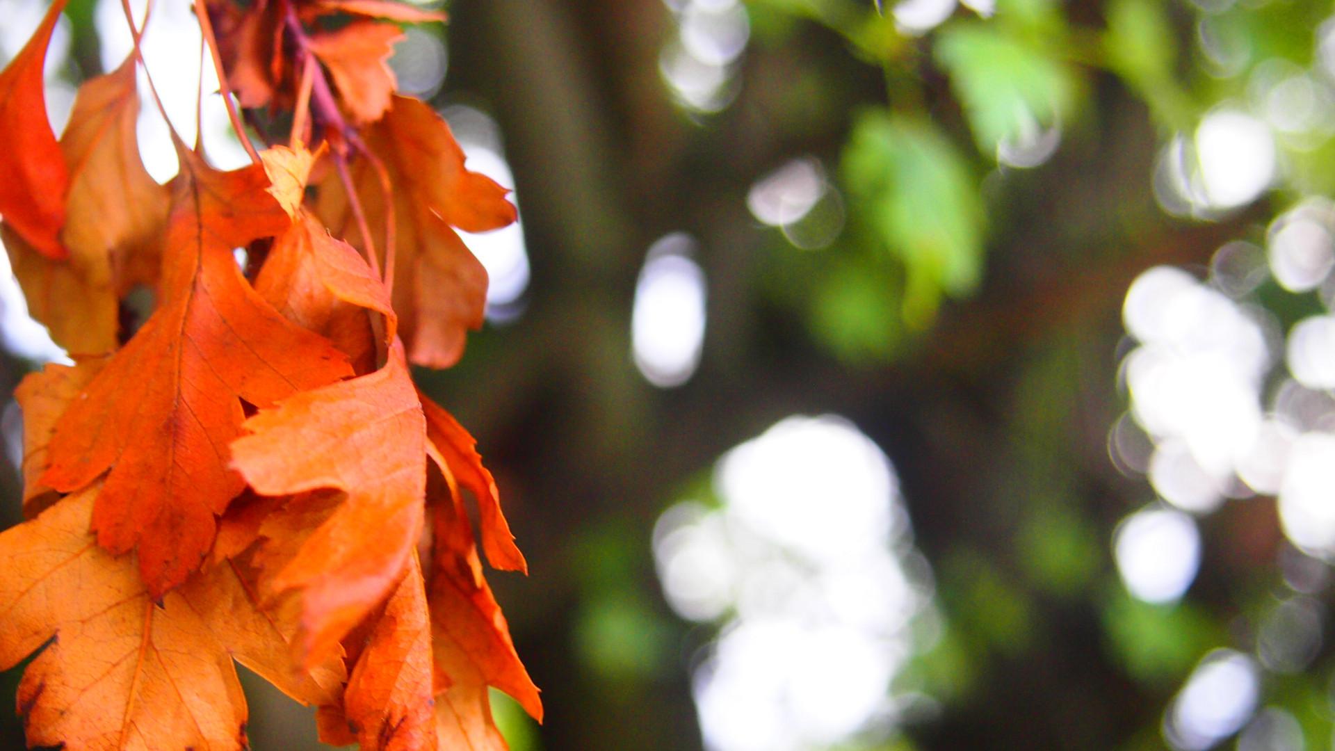 Der Herbst kommt...